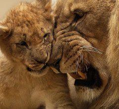 lion-bitcoin-altcoins