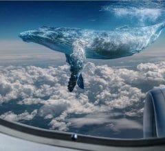 Une baleine Bitcoin s'envolant paresseusement To The Moon