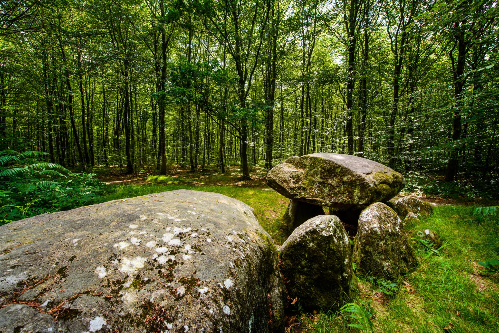 A dolmen in the forest trace of celts in the brittany region