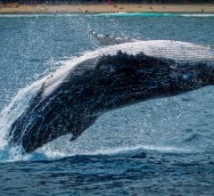 whales transfert bitcoin BTC institutionnels