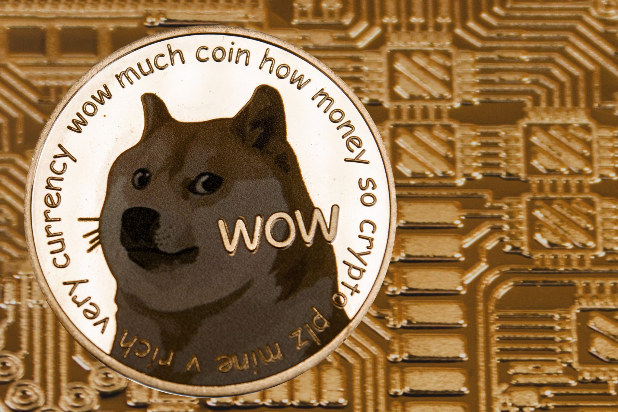Siver coin Dogecoin on the gold circuit background.