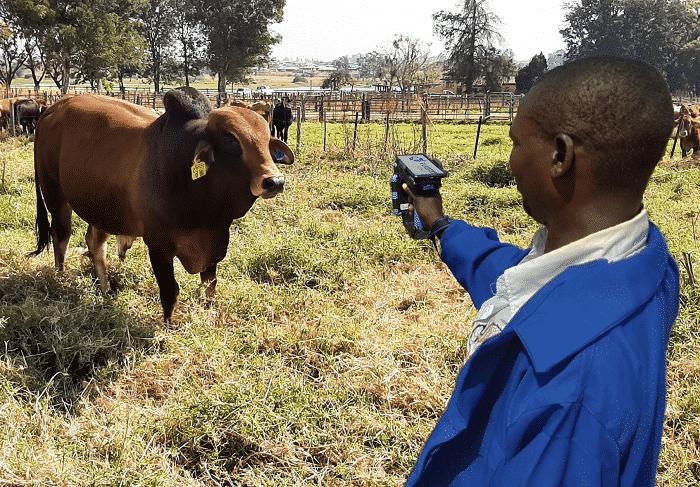 e-livestock blockchain